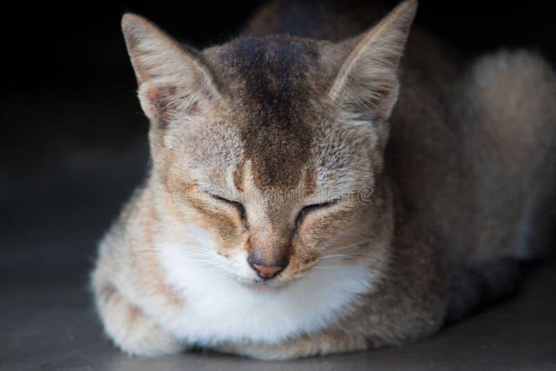 Zdjęcie z Brown Tabby Cat fotografia royalty free