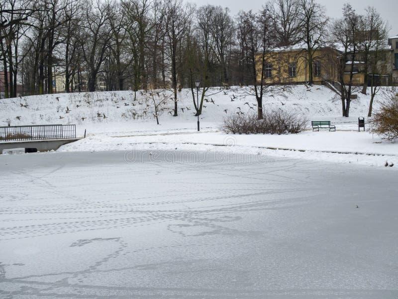 Zdobycie kaczek latających w dzień zimowy zdjęcia stock