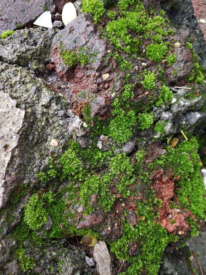Zdobycz natury tapety zieleni ścienna skała zdjęcie stock