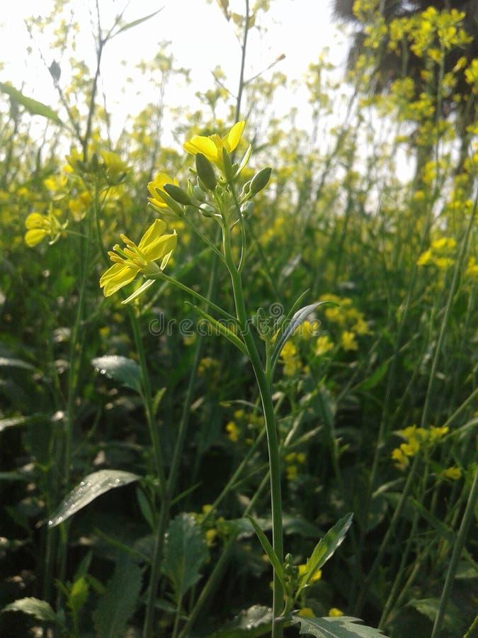 Zdobywający kwiaty wewnątrz z pszczołą w przyzwoicie spojrzeniu obrazy stock