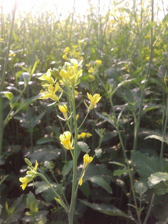 Zdobywający kwiaty wewnątrz z pszczołą w przyzwoicie spojrzeniu zdjęcia royalty free