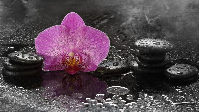 Zdrój orchidea na ciemnym tle z, kamienie i obraz stock