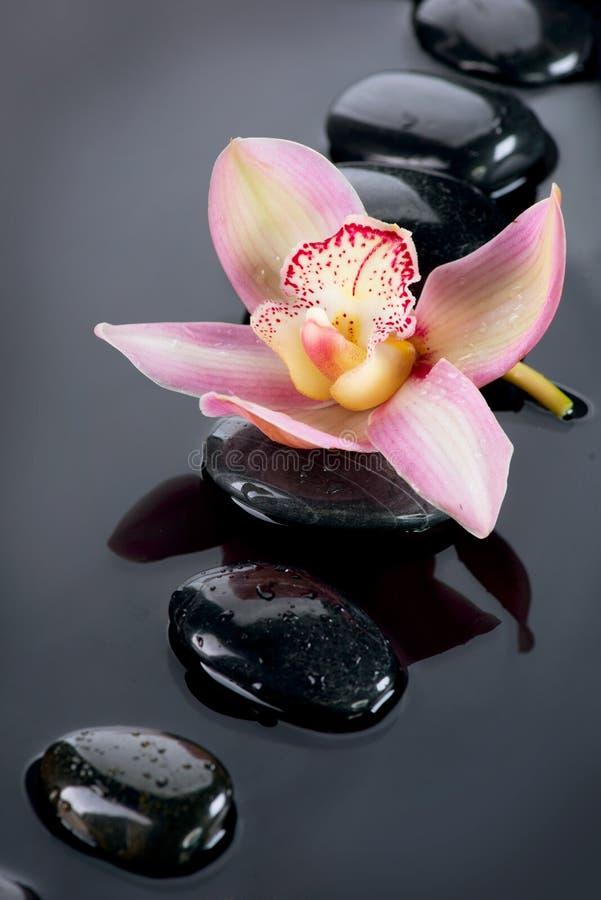 Zdrojów kamienie i Storczykowy kwiat obraz royalty free