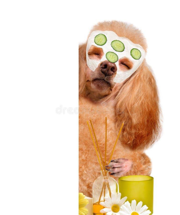 Zdroju obmycia pies fotografia stock