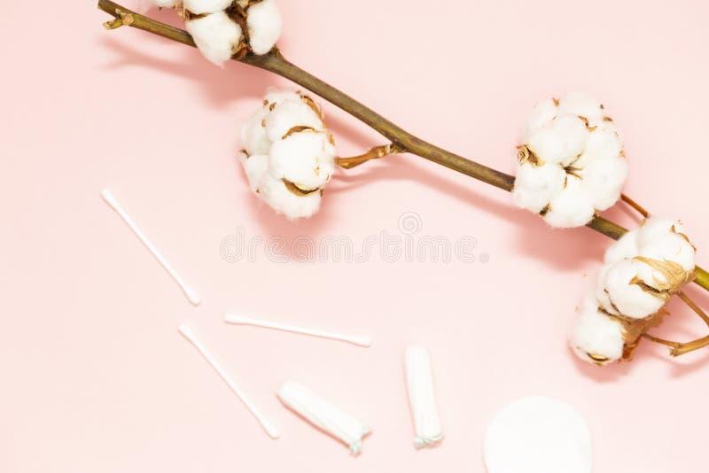 Zdroju pojęcie Płaski tło z gałąź bawełna, z bawełniani ochraniacze Bawełniani Makeup zmywacza kosmetyki obrazy royalty free