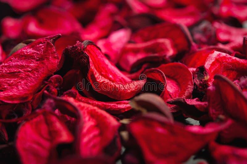 Zdroju tło wysuszeni płatki czerwone róże zdjęcia stock