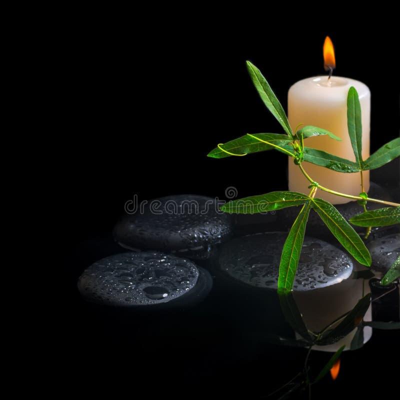 Zdroju tło zielony tendril passionflower, świeczka i zen st, obrazy stock