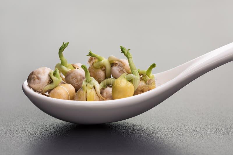 zdrowa żywność Hiszpańscy grochów chickpeas zieleni krótkopędy Biała łyżka zdjęcia royalty free