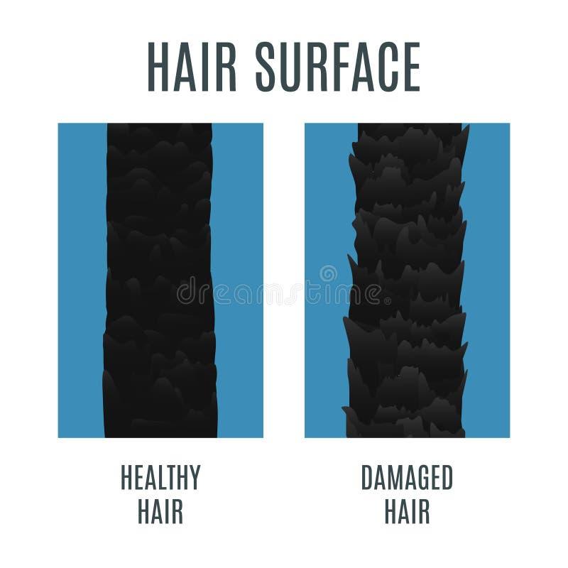 Zdrowa i uszkadzająca włosy powierzchnia ilustracja wektor