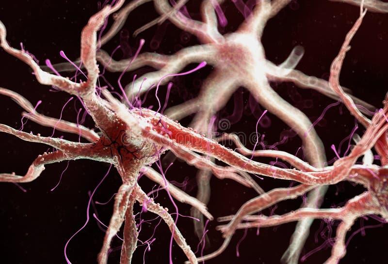 Zdrowa ludzka nerwowa komórka ilustracji