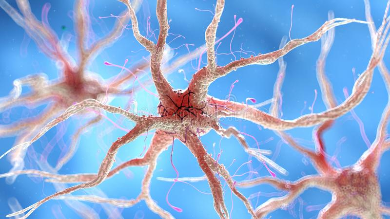 Zdrowa ludzka nerwowa komórka ilustracja wektor