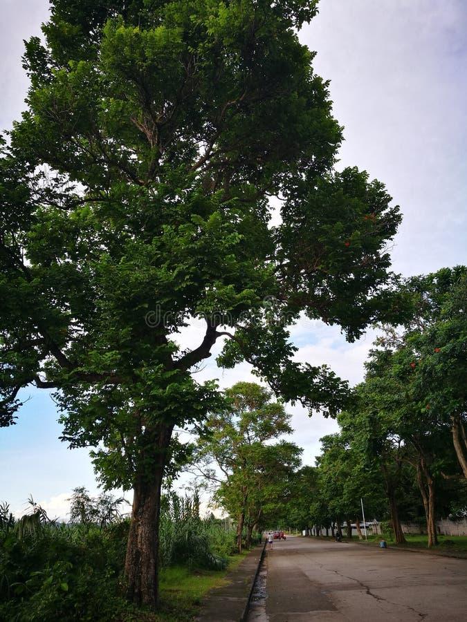 Zdrowi i Zieleni drzewa przy Centrum centrum handlowym obraz stock
