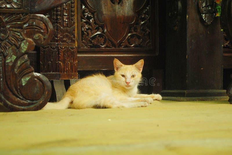 Zdrowy, żwawy, mądrze i chłodno kot, zdjęcie royalty free