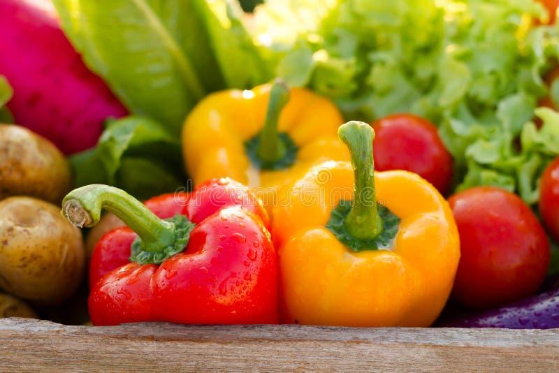 Zdrowy karmowy czysty świeży warzywo w koszu obraz royalty free