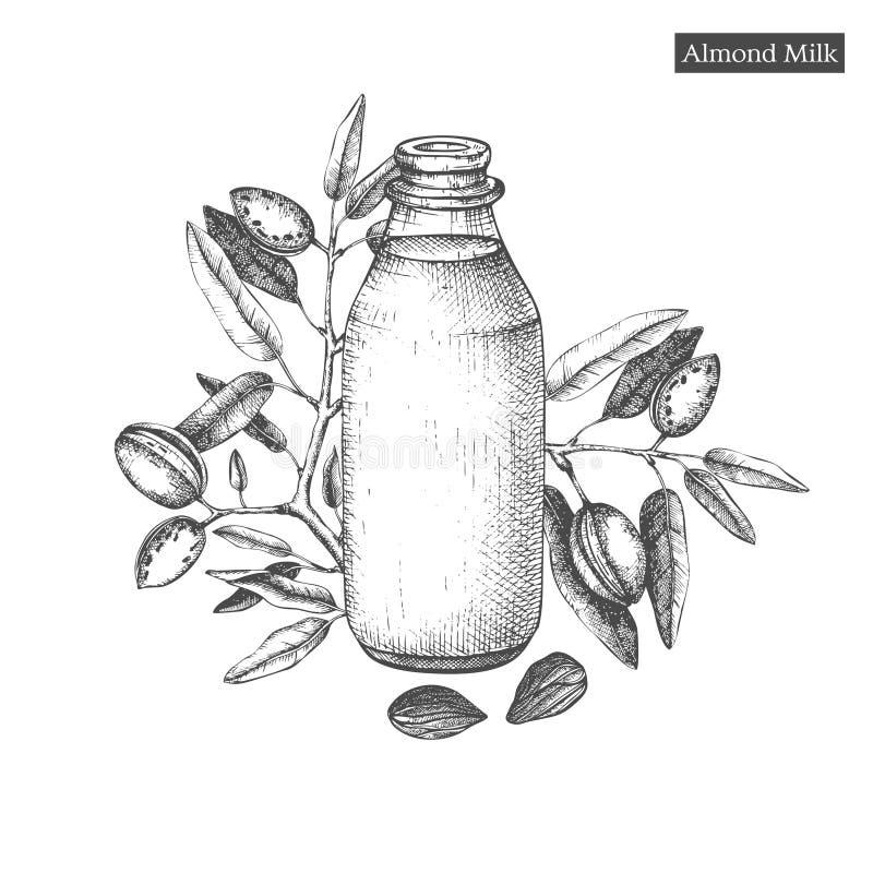 Zdrowy karmowy szablon Wręcza patroszone ilustracje migdały i butelka migdału mleko Oznakujący wektorowego projekt lub pakujący royalty ilustracja