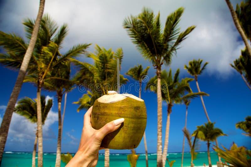 Zdrowy napój na Karaibskiej plaży Ananas i kokosowy handheld na plaży wśród drzewek palmowych fotografia royalty free