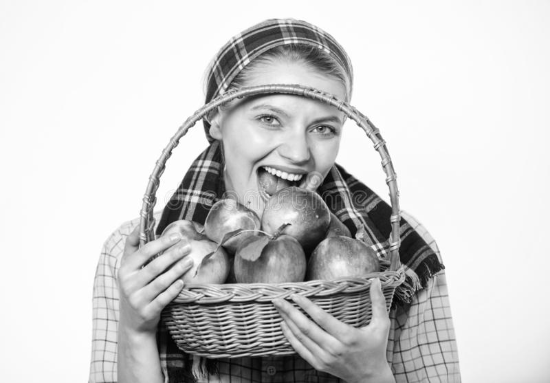 Zdrowy Pojęcie Kobiety ogrodniczki wieśniaka stylu chwyta kosz z jabłkami na białym tle Kobieta wieśniak niesie zdjęcia stock