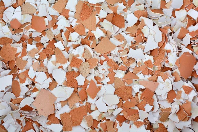 Zdruzgotani eggshells zdjęcia stock