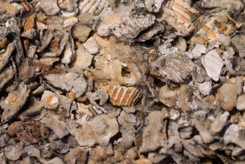 Zdruzgotany seashell tło fotografia royalty free