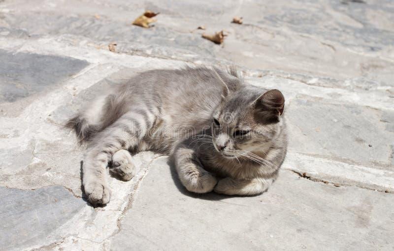Zdziczała kot pozycja w słońcu zdjęcia royalty free