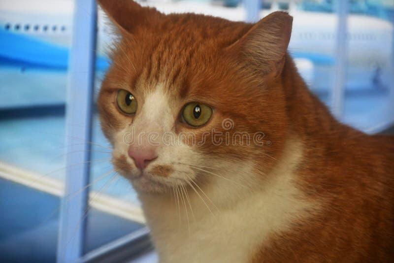 Zdziczały kota portret fotografia royalty free