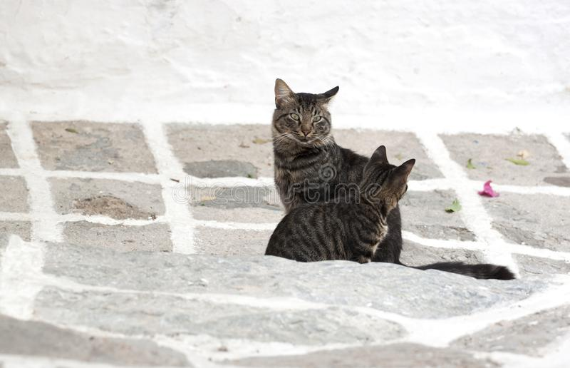 Zdziczali greccy koty obrazy stock