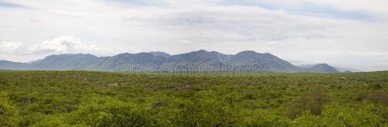 Zebr góry w Północnym Namibia wśród Kunene regionu obraz stock