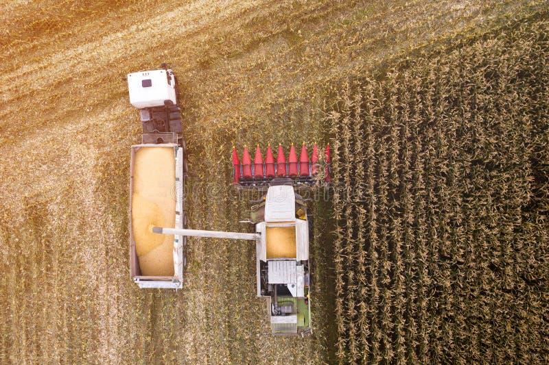 zebrać Syndykata żniwiarz nalewa kukurydzane adra w ciężarówkę fotografia royalty free