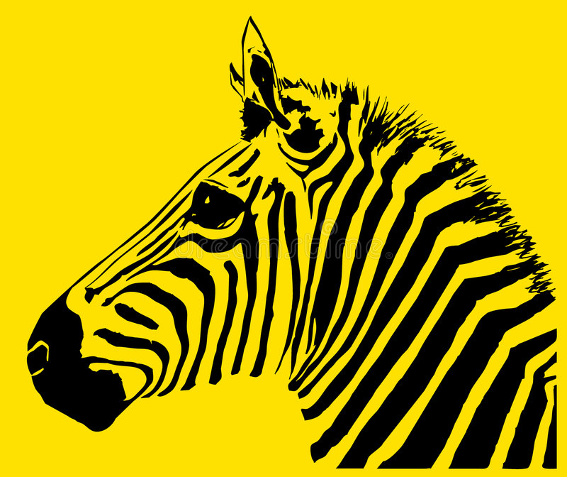 zebra ilustracja wektor