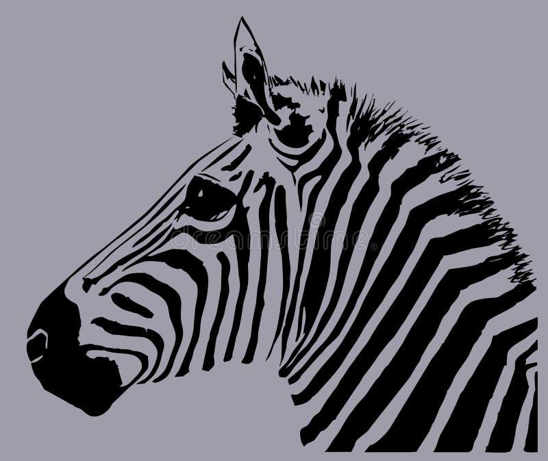 Zebra stock illustration