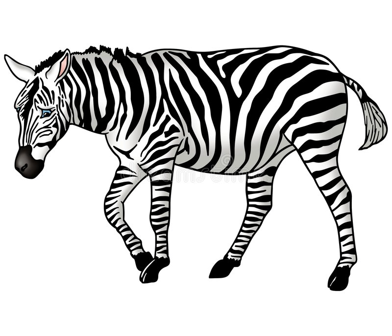 Zebra illustrazione di stock