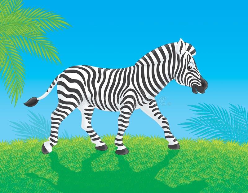 Download Zebra Stock Photo - Image: 21746510