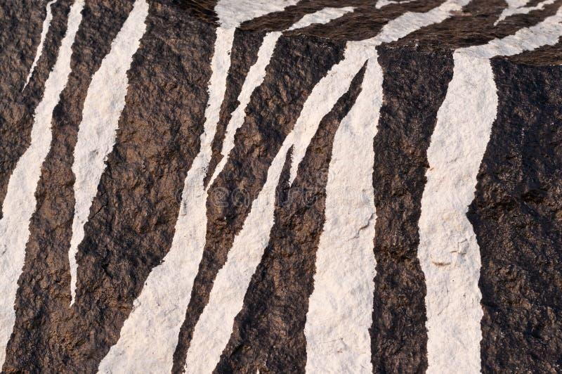 Download Zebra stock illustration. Image of color, dark, backgrounds - 21948021