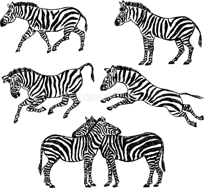 Download Zebra stock vector. Illustration of tail, striped, drawn - 24904756