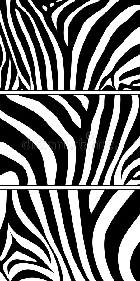 zebra royalty ilustracja