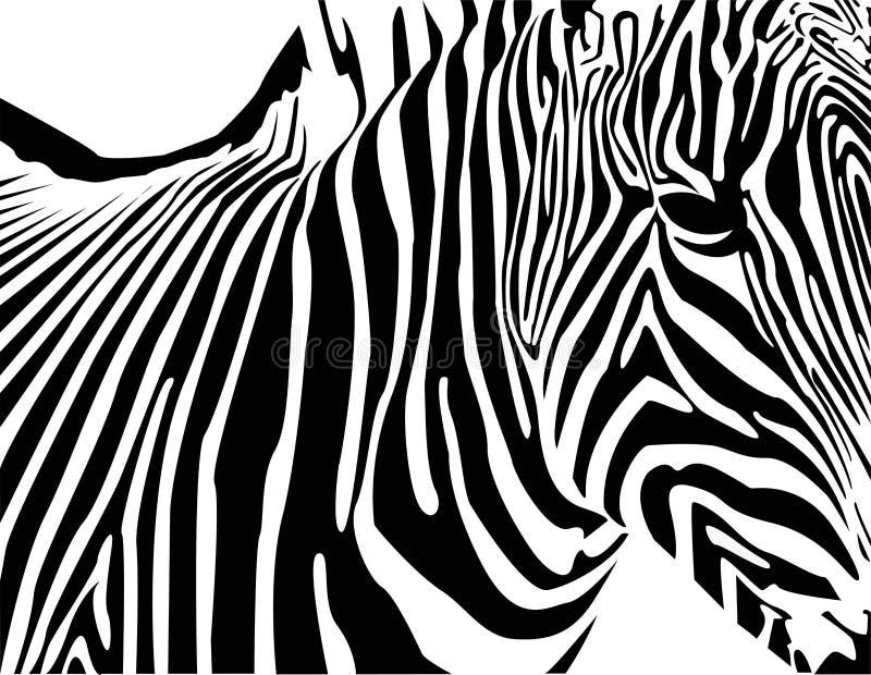 Zebra vector illustration