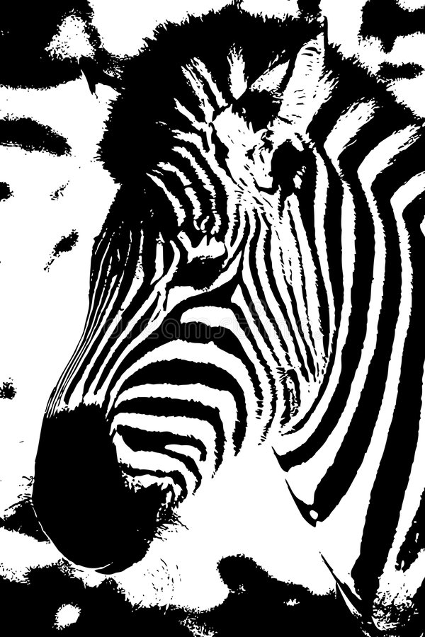 Zebra stock abbildung