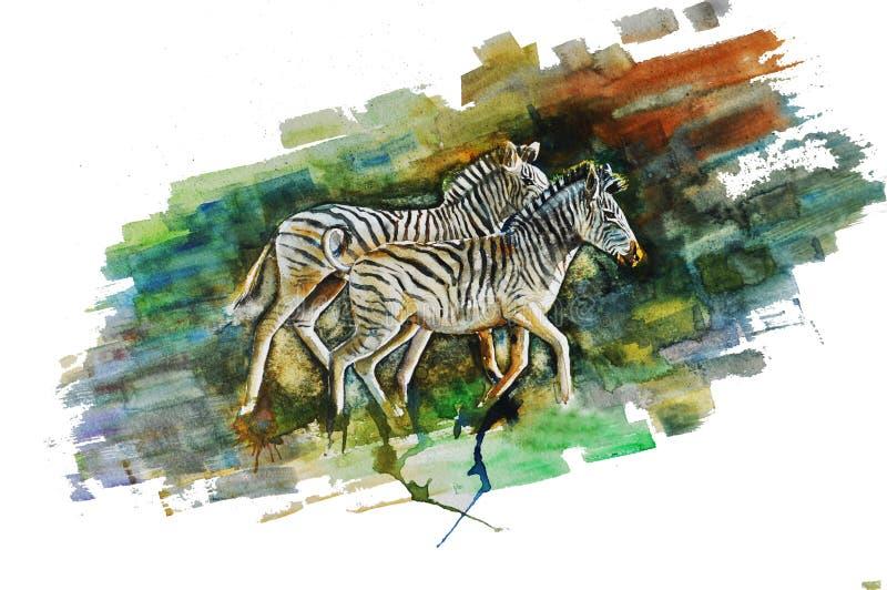 Zebra ilustração stock