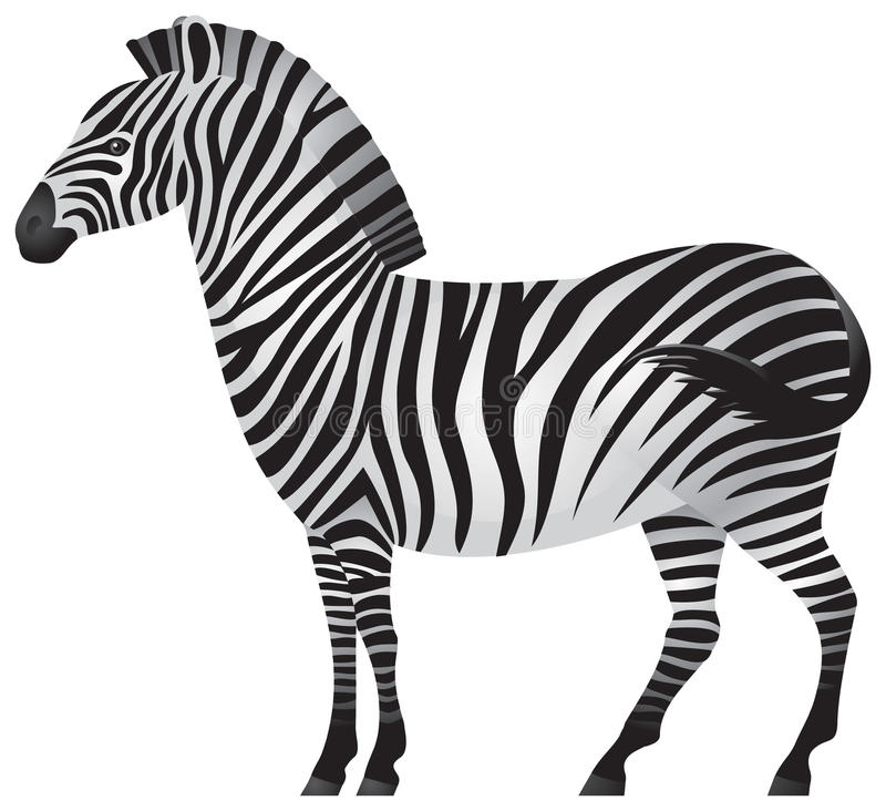 Download Zebra, African Animal In Royalty Free Stock Images - Image: 16950529