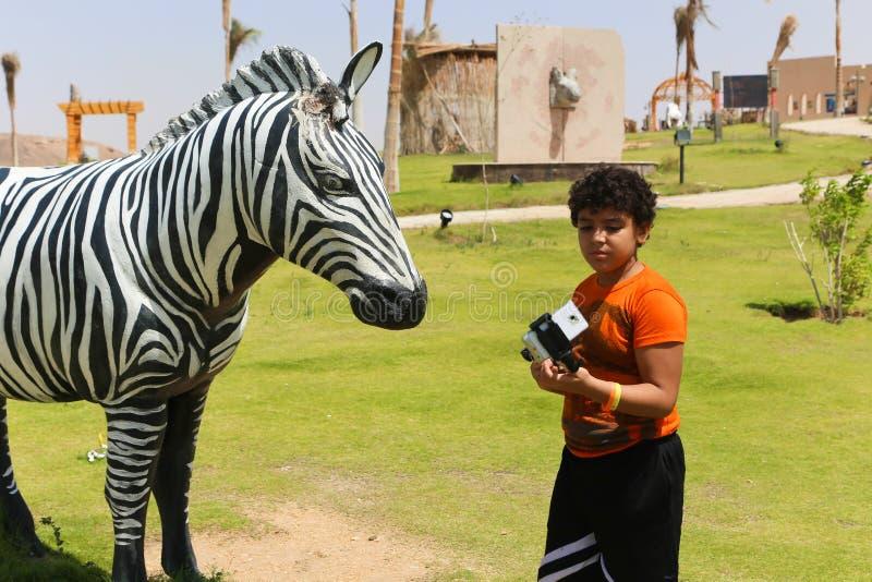 Zebra afrykanina park przy Aswan, Egipt zdjęcie royalty free