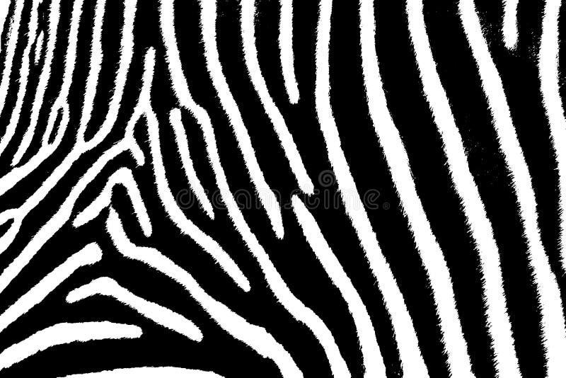 Zebra Art royalty free stock photography