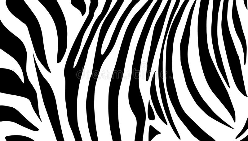Download Zebra black and white stock vector. Illustration of baby - 66509759