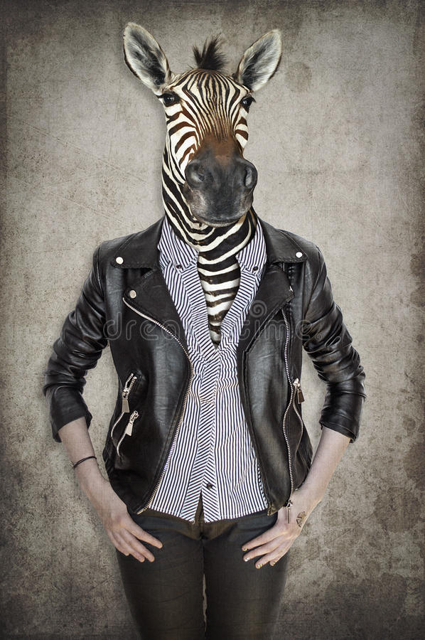 Zebra in clothes. Concept graphic in vintage style royalty free stock photo