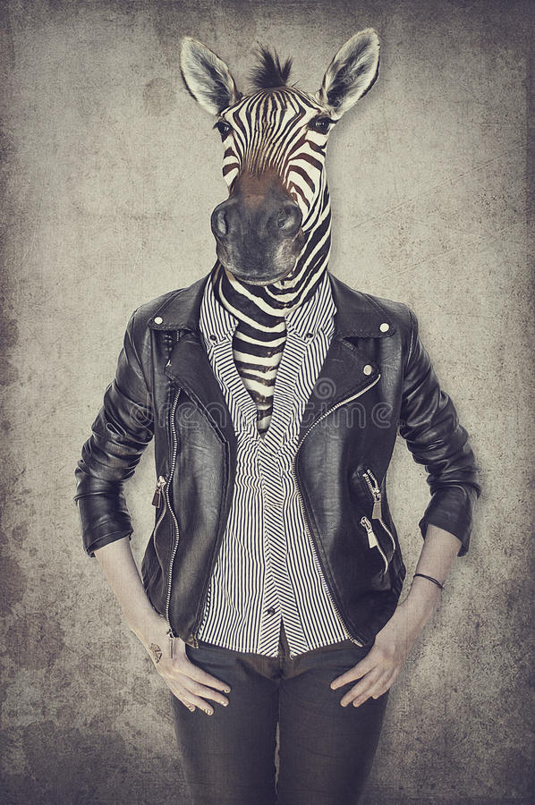 Zebra in clothes. Concept graphic in vintage style. royalty free stock photo