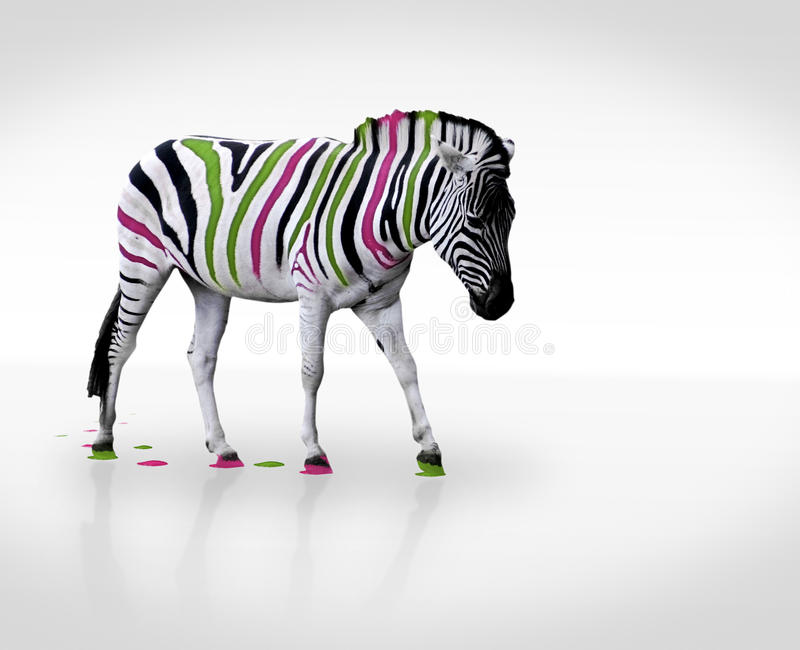 Zebra creativa foto de stock royalty free