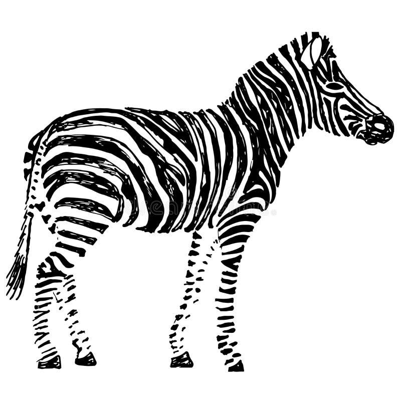Zebra disegnata a mano Oggetto su bianco royalty illustrazione gratis