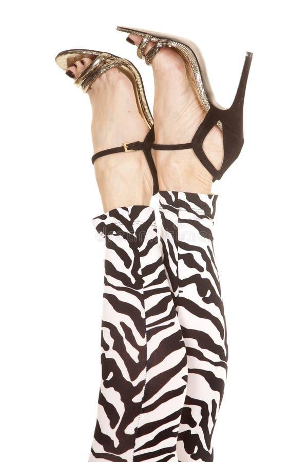 Zebra dos pés da mulher nos saltos foto de stock