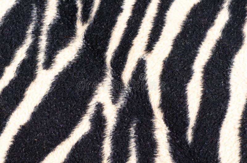 Zebra dywanik fotografia royalty free