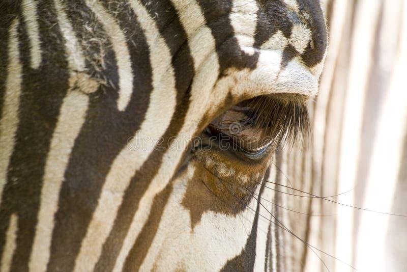 Zebra Eye. (Detail of Zebra stock photos