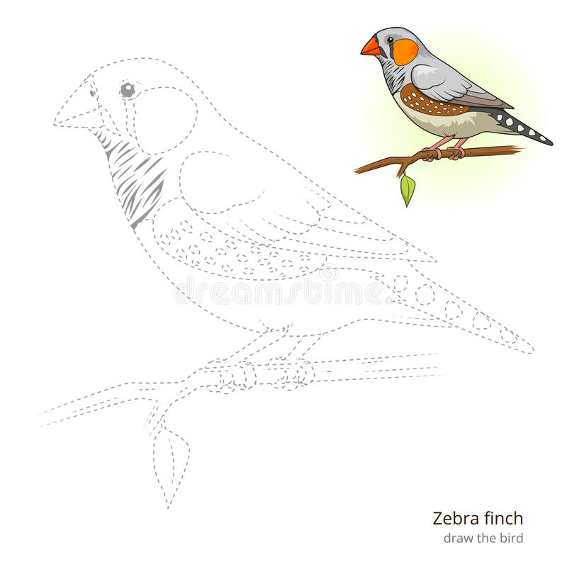 Zebra Finch Bird Learn To Draw Vector Stock Vector - Image ...